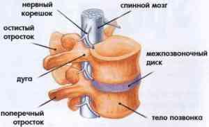 Как бороться с шейно-грудным остеохондрозом?