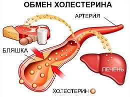 poleznii-i-vrednii-holesterin