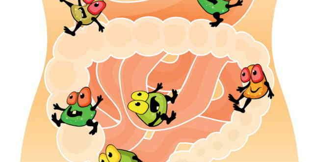 лактобактерии бифидобактерии